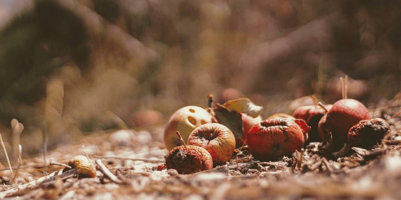 the underlying causes of food waste